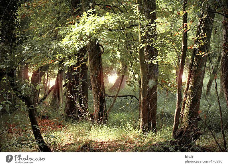 fairytale forest Environment Nature Plant Beautiful weather Joie de vivre (Vitality) Wisdom Mysterious Environmental protection Transience Lanes & trails