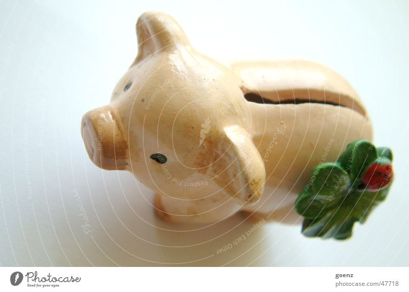 Money Rich Swine Save Ladybird Money box Slit