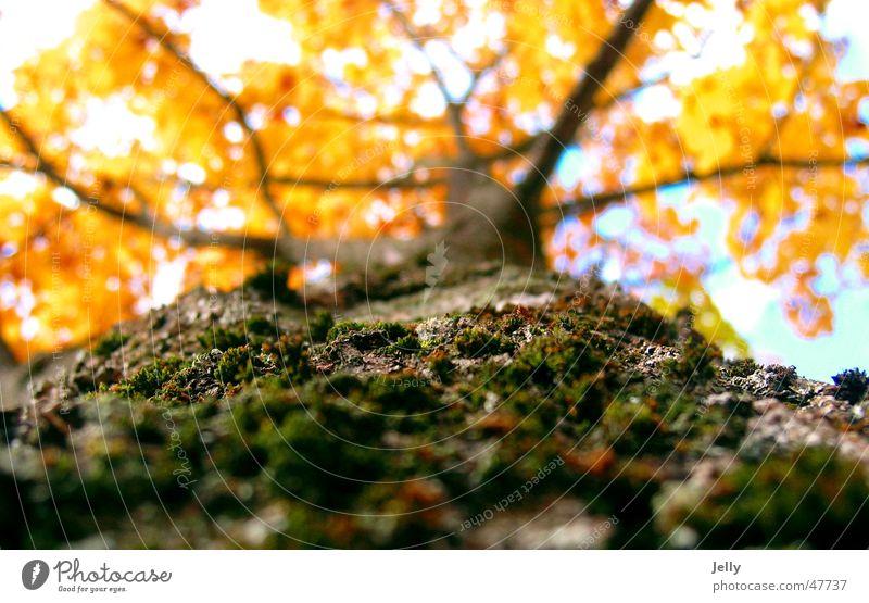 Nature Sky Tree Green Yellow Autumn Brown Tree bark