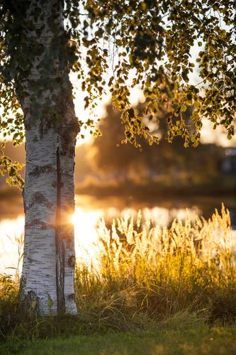Nature Vacation & Travel Water White Plant Summer Sun Tree Landscape Leaf Yellow Warmth Grass Lake Field Gold