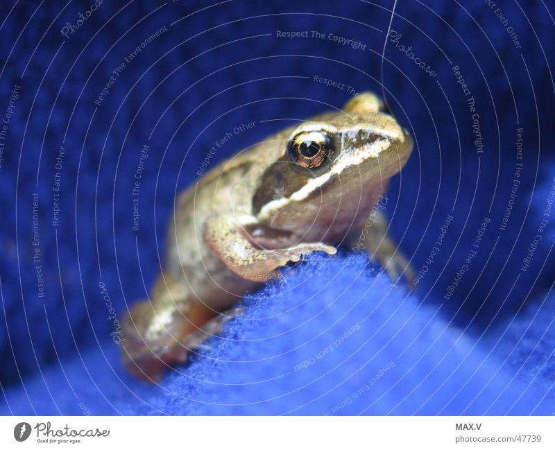 Eyes Animal Small Cloth Near Frog Sweater Amphibian