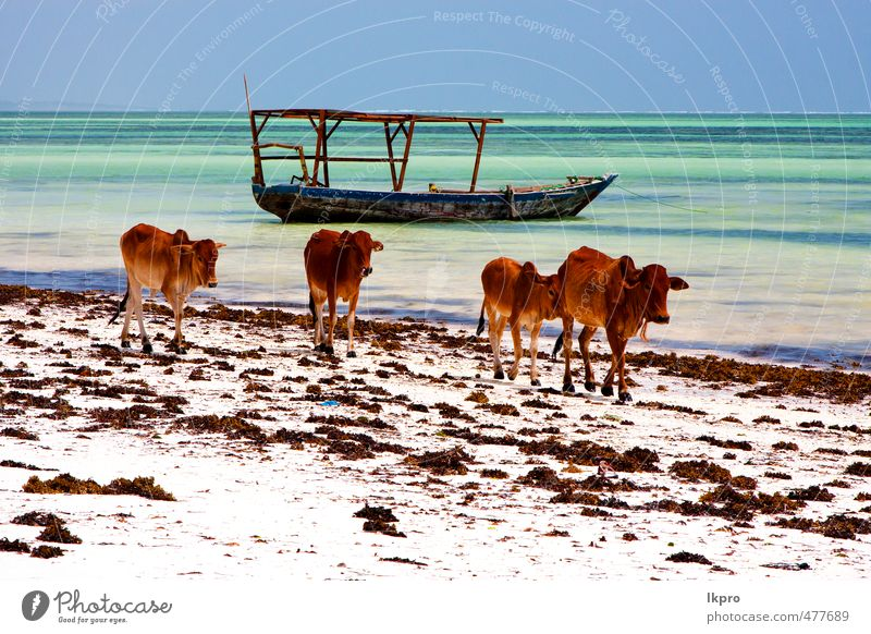 pirague in the blue lagoon relax of zanzibar africa Vacation & Travel Tourism Trip Beach Ocean Island Waves Sailing Nature Animal Sand Clouds Rock Coast