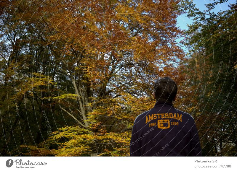 Amsterdam in the Fall Autumn Dark hair Green Tree Forest Sky Orange vest Looking To fall sweatshirt trees view