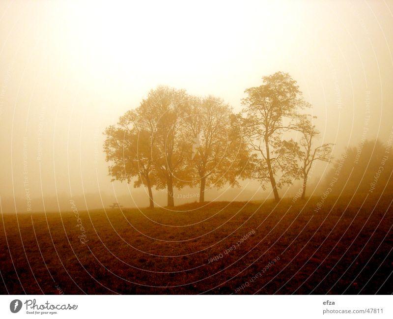 Sky Tree Autumn Meadow