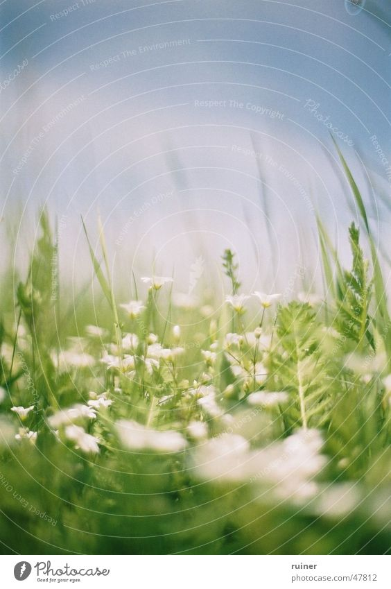 Sky White Flower Green Blue Summer Meadow Jump Blossom Spring Lawn