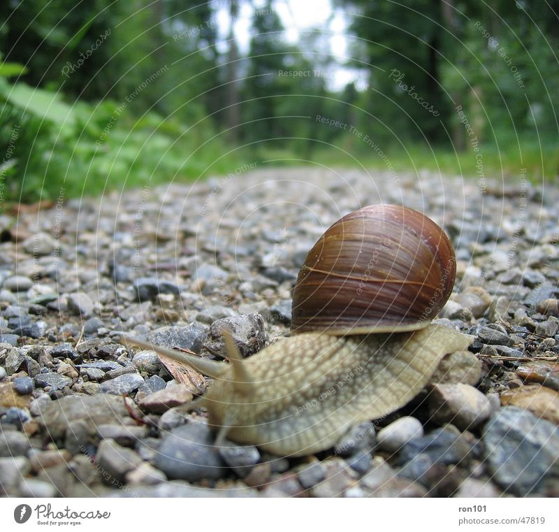 SNAIL Slowly Time Snail shell Feeler Pebble Forest Crawl Mucus Leaf Tree Gray Brown Lanes & trails Stone Eyes Sky green