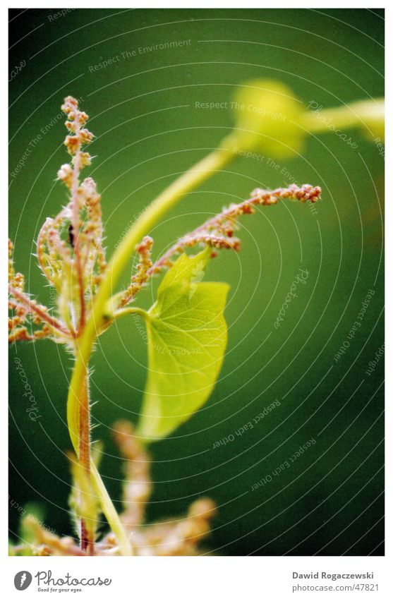 microglobin Plant Near Flower Green Macro (Extreme close-up) Nature Art Close-up