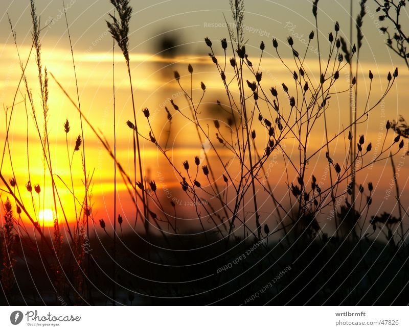 The last rays of the sun Grass Blade of grass Plant Sunbeam Sunset Clouds Red Yellow Gray Black Meadow Autumn Stalk Back-light Color gradient Colour transition