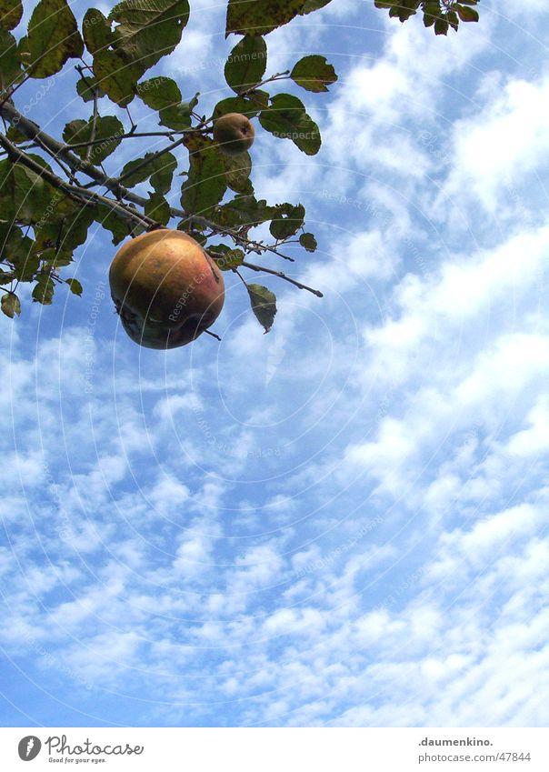 Sky Nature Sun Landscape Leaf Calm Clouds Life Garden Freedom Fruit Power Force Symbols and metaphors Apple Americas