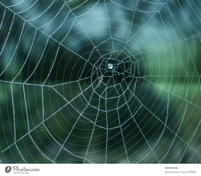 ...spun into the blue Spider's web Autumn Fog Net Rope Drops of water Blue