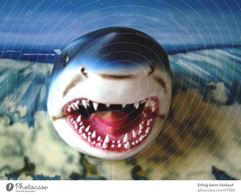 Ocean Set of teeth Shark Water wings Sylt The deep Trenchant