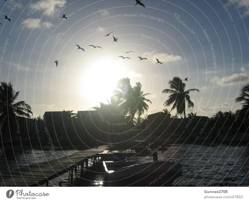 Sunset Caye Caulker Palm tree Beach Ocean Wanderlust Cuba Belize caye caulker
