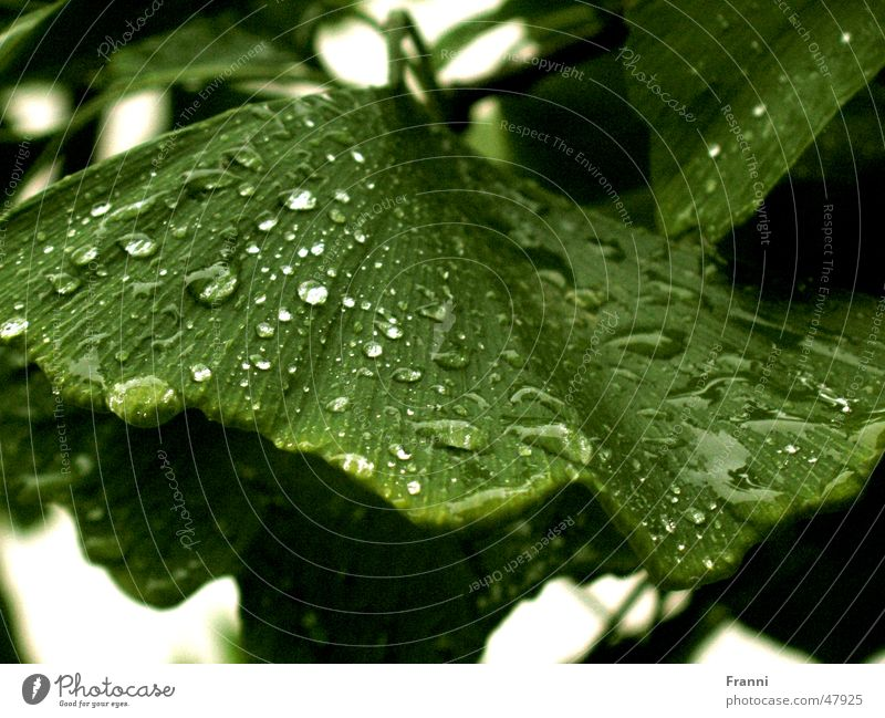 Nature Water Tree Green Leaf Drops of water