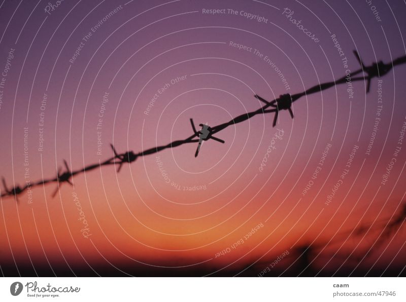 barbed wire Barbed wire Sunset Dusk