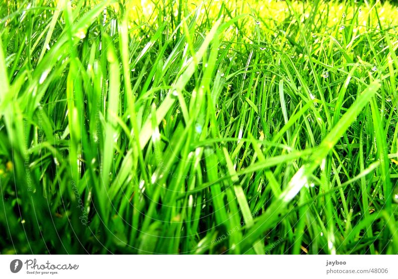 Green Summer Meadow Grass Spring Garden Fresh Floor covering Blade of grass Refreshment