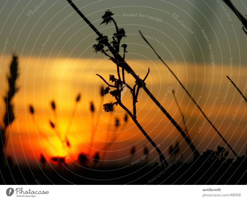 Nature Sky Sun Plant Red Black Clouds Yellow Autumn Meadow Grass Gray Orange Stalk Twig October
