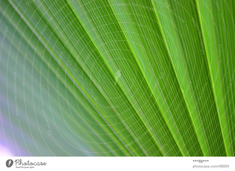 palm fronds Palm tree Plant Green Nature Growth Leaf grow Exotic wag