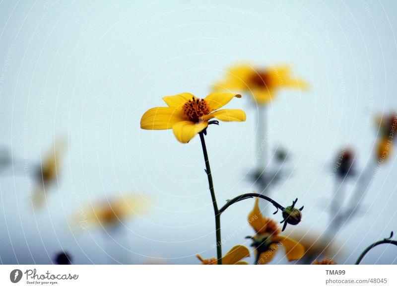 a little summer left Flower Summer Yellow Moody Bright background