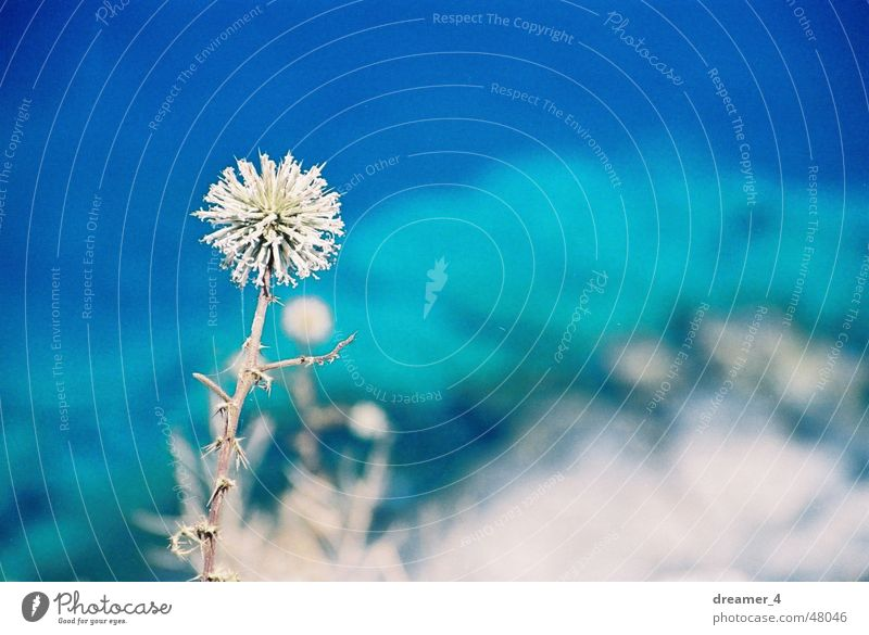 Life on the Abyss Ocean Flower Edge Summer Greece Physics Dry Blue Warmth