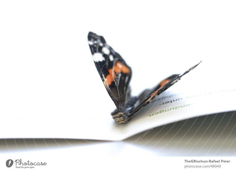 papillon Butterfly White farfagl farfalino Death Orange summer bird