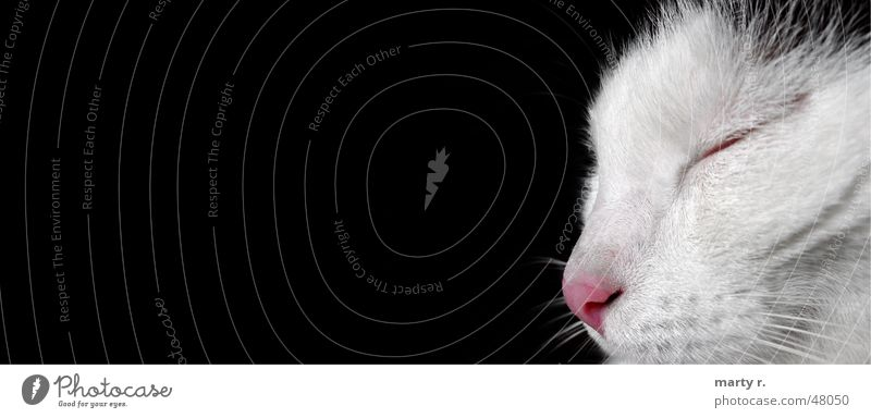Miny Cat Black White Sleep Dream Pelt Landscape format Nose Eyes mustached Partially visible