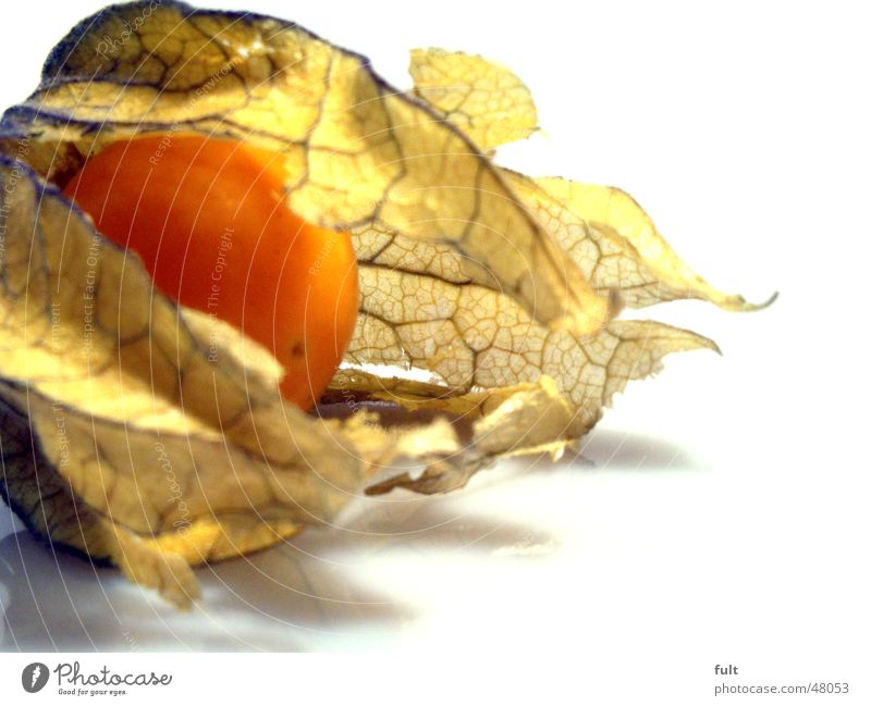 physalis Physalis Fresh Healthy Round Leaf Soft Yellow Beige Open Nutrition Delicious Fruit Virgin forest Exotic Orange Bright Lie Macro (Extreme close-up)