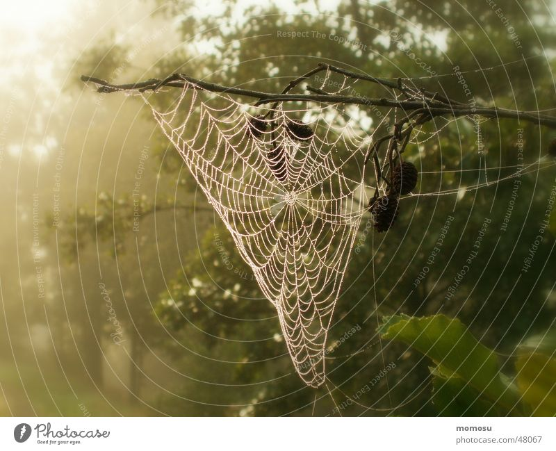 Nature Tree Sun Forest Autumn Fog Rope Spider's web Net