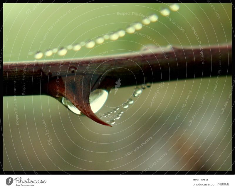 Autumn Fog Drops of water Rope Bushes Branch Twig Thorn Spider's web