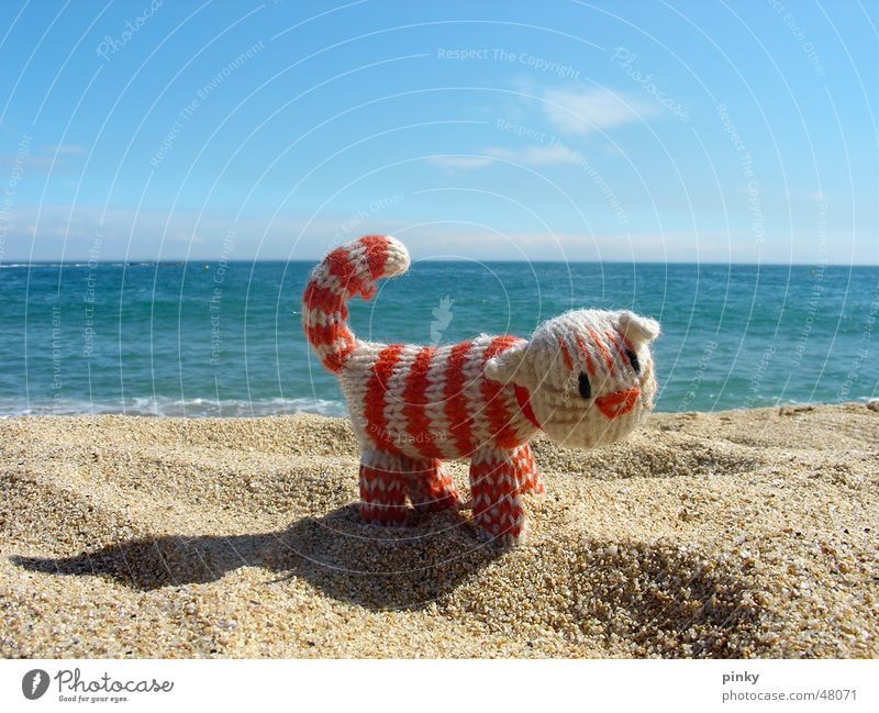 More Sea Cat Rope Ocean Barcelona Beach Striped Animal Cuddly toy Domestic cat kitty Crocheted sea Sand Blue le chat Loneliness Around-the-world trip