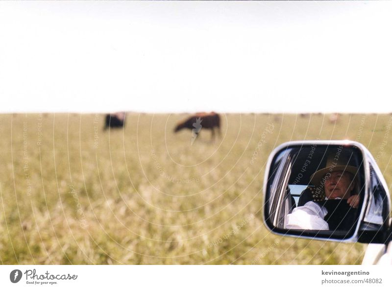 Mirror Agriculture Cow Pasture Argentina Large-scale holdings