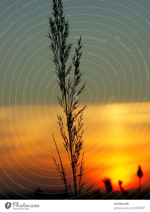 Nature Sky Sun Plant Red Black Clouds Yellow Autumn Meadow Grass Gray Orange Point Stalk Blade of grass