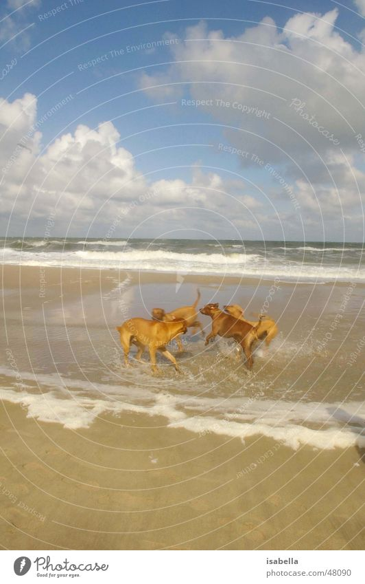 clone dogs Dog Cloning Ocean Vacation & Travel Animal Playing Water