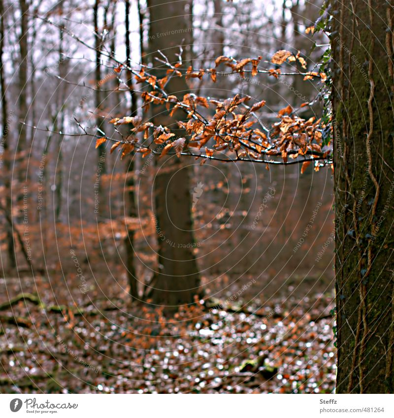 Bathing in an autumnal forest forest bath November Forest Brown Autumn leaves forest air Automn wood Forest atmosphere Silence in the forest tranquillity