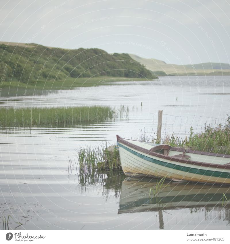 harmony Environment Landscape Sky Horizon Summer Beautiful weather Plant Bushes Common Reed Waves Lakeside Esthetic Simple Small Natural Gray Green Moody Calm