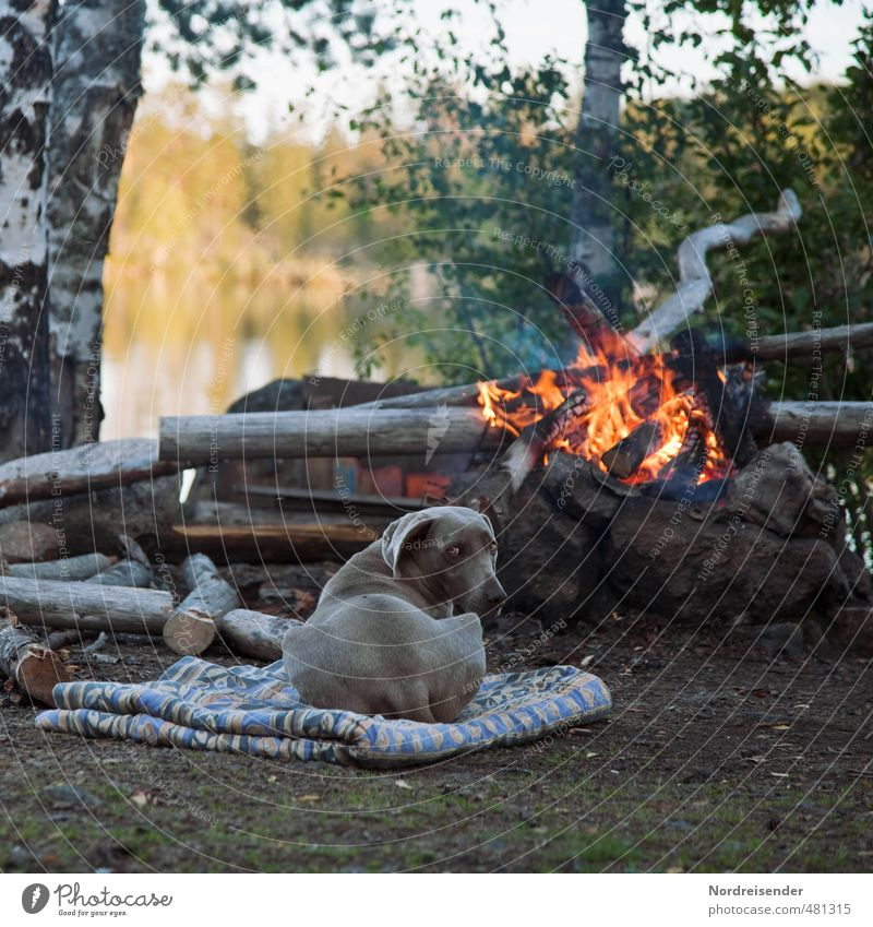 Come to the fire.... Adventure Freedom Nature Fire Tree Lakeside Animal Dog Observe Relaxation To enjoy Natural Contentment Trust Safety (feeling of) Loyal