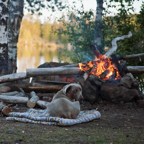 Dog Nature Tree Relaxation Animal Warmth Freedom Natural Moody Contentment Warm-heartedness To enjoy Observe Adventure Fire Lakeside