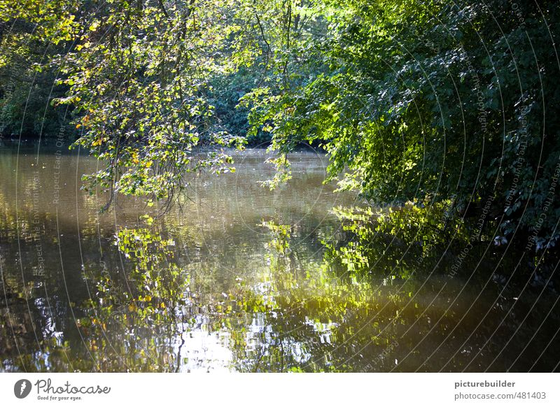 Nature Green Plant Summer Tree Calm Landscape Forest Idyll Bushes Beautiful weather Discover Pond Forest lake