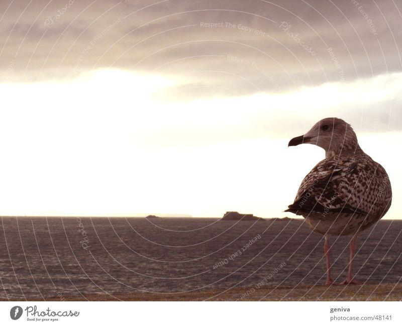 Nature Sky Sun Bird