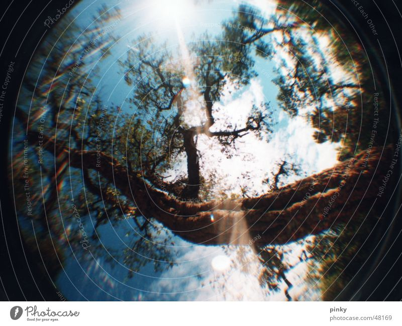 miracle tree Tree Light Leaf Tree bark Sky blue Summer Mystic Barcelona Enchanted forest Fisheye Güell Park Lomography Nature Sun Branch Lens