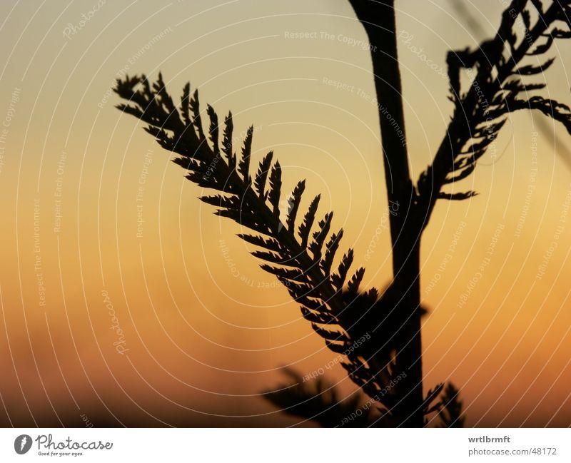 Nature Sky Sun Plant Red Leaf Black Clouds Autumn Grass Gray Orange Point Stalk Blade of grass Twig