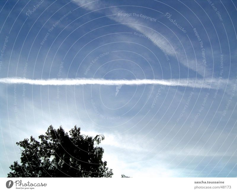 Sky White Tree Blue Black Clouds Aviation Vapor trail