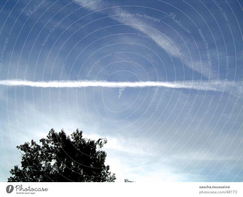 skystormer Clouds Vapor trail Tree White Black Sky Aviation Light (Natural Phenomenon) Blue ...