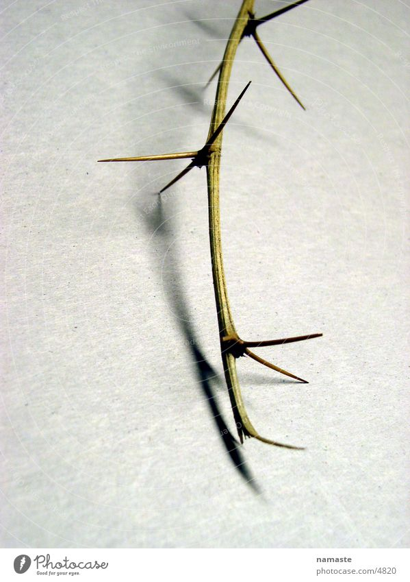 Twig Distress Thorn