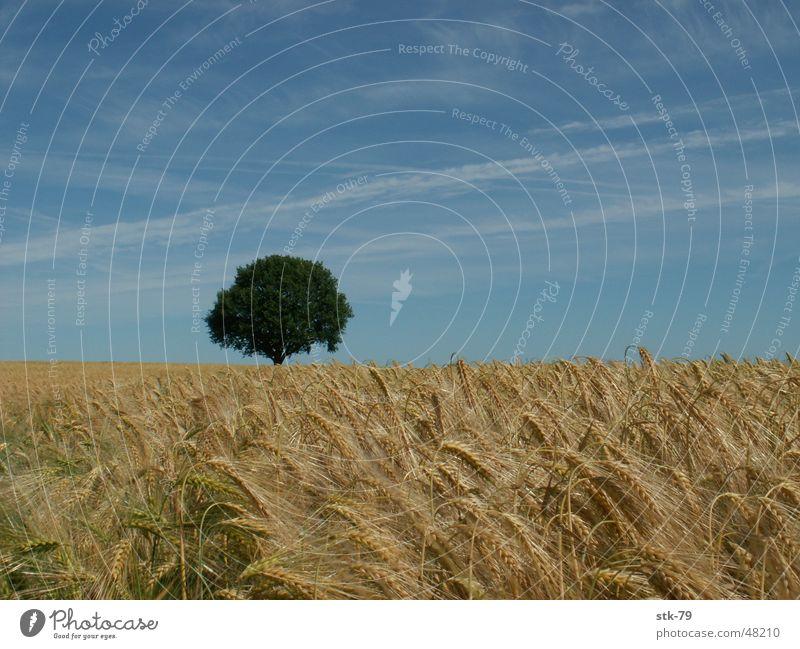 Tree Field Gold Grain