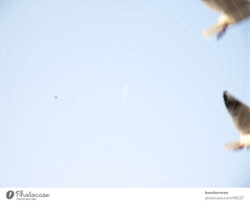 Bye Bye fly away Seagull Bird Ocean Vacation & Travel Coast Lake Water Sky Sun