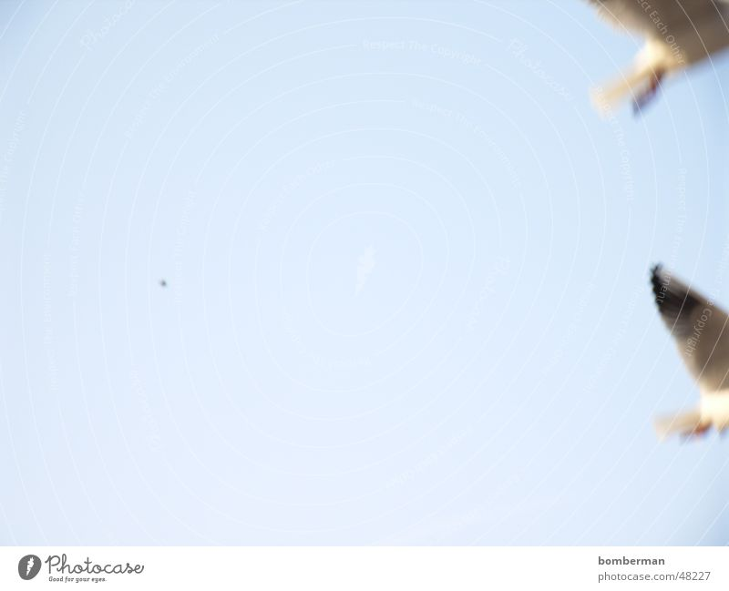 Water Sky Sun Ocean Vacation & Travel Lake Bird Coast Seagull