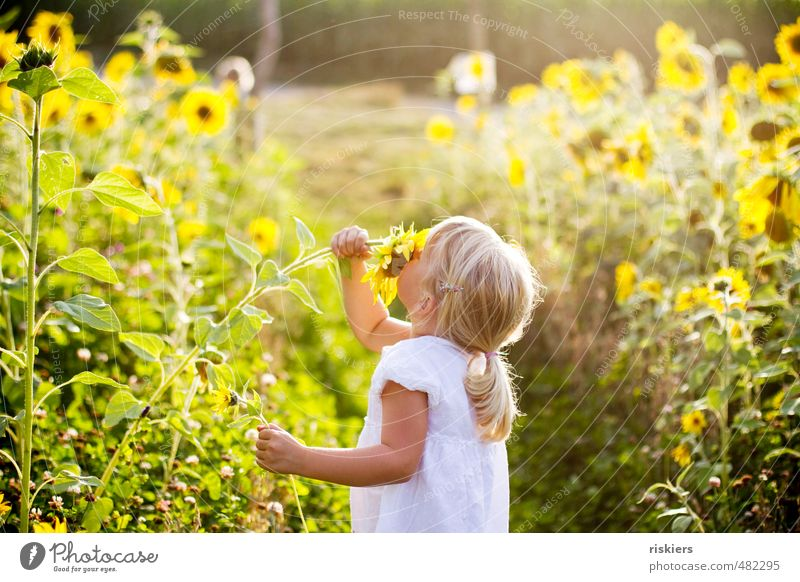 sunflower child Human being Feminine Child Girl Infancy 1 3 - 8 years Environment Nature Landscape Plant Sunrise Sunset Sunlight Summer Autumn Beautiful weather