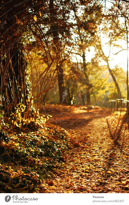 An idyll free of foliage vacuum cleaners Relaxation Calm Garden Autumn Plant Park Brown Yellow Gold Leaf golden autumn Colour photo Exterior shot Deserted