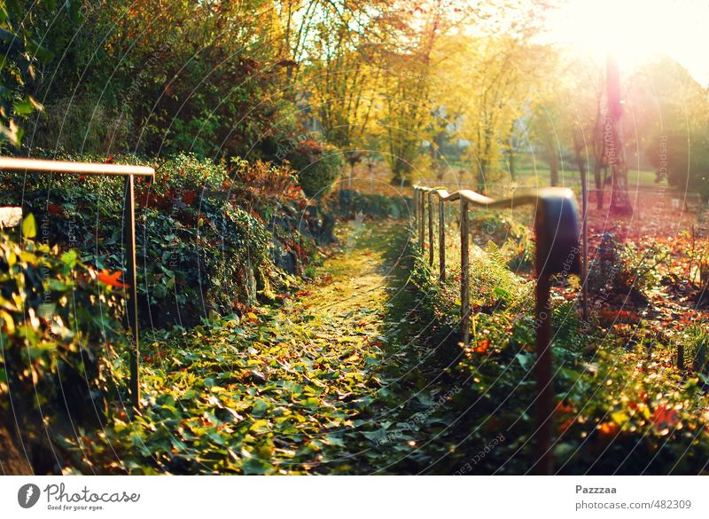 Nature Plant Summer Relaxation Calm Leaf Autumn Garden Park Trip Harmonious