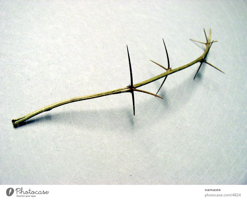 thorns pave his way 2 Distress Nature Detail thorn branch